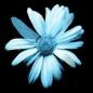 psycicflower