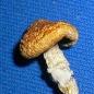The_Mushroom