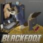 BlackfootFerret