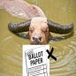 voter_buffalo