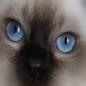 kittensdontlie