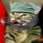Catstro