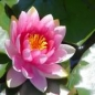 bodhisatwa