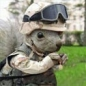 Iron_Squirrel